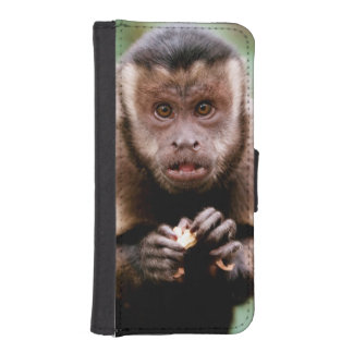 Close-up of a black-capped capuchin monkey