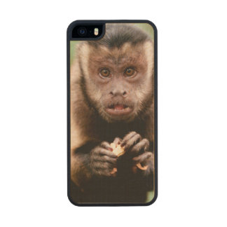 Close-up of a black-capped capuchin monkey wood iPhone SE/5/5s case