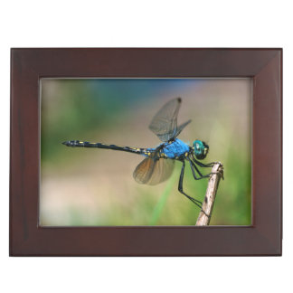 Close-Up Of A Blue Dragon Fly On A Branch Keepsake Box