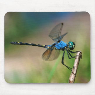 Close-Up Of A Blue Dragon Fly On A Branch Mouse Pad