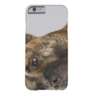 Close-up of a Boxer Barely There iPhone 6 Case