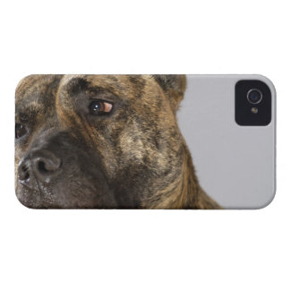 Close-up of a Boxer iPhone 4 Covers