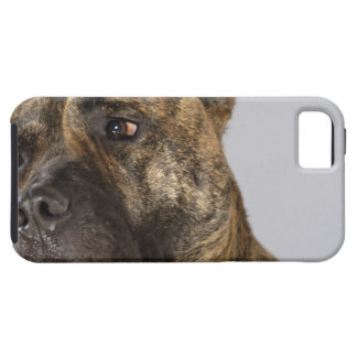 Close-up of a Boxer iPhone 5 Cases