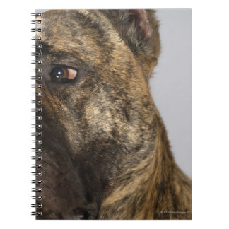 Close-up of a Boxer Notebook