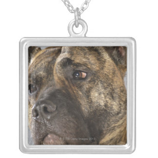Close-up of a Boxer Silver Plated Necklace