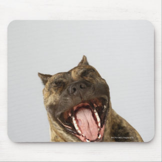 Close-up of a Boxer with its mouth open Mouse Mat
