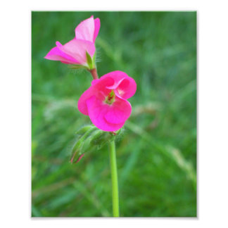 close up of a bright pink flower. 8x10 print
