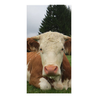 Close up of a brown and white cow laying down personalised photo card