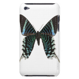 Close-up of a butterfly iPod Case-Mate cases