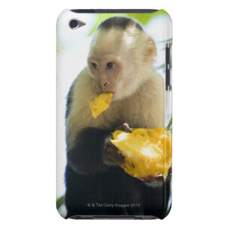 Close-up of a capuchin monkey eating a fruit iPod touch covers