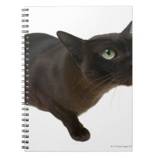 Close-up of a cat 2 notebook