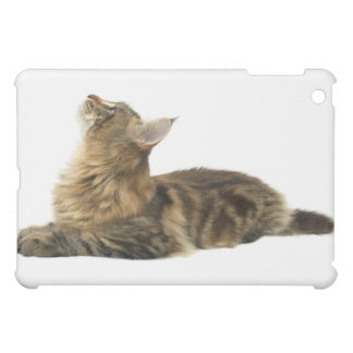 Close-up of a cat 3 cover for the iPad mini
