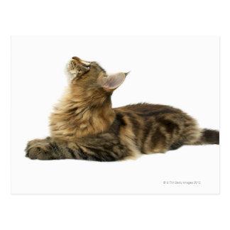 Close-up of a cat 3 postcard