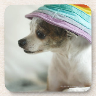 Close-up of a Chihuahua wearing a hat Coaster