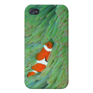 Close up of a clown anemone fish, Okinawa, Japan iPhone 4 Case
