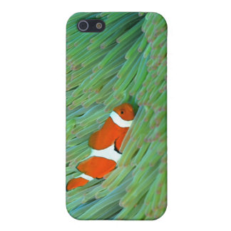 Close up of a clown anemone fish, Okinawa, Japan iPhone 5 Cover