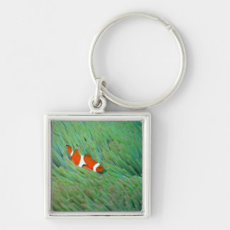 Close up of a clown anemone fish, Okinawa, Japan Silver-Colored Square Key Ring