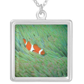 Close up of a clown anemone fish, Okinawa, Japan Silver Plated Necklace