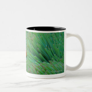 Close up of a clown anemone fish, Okinawa, Japan Two-Tone Coffee Mug