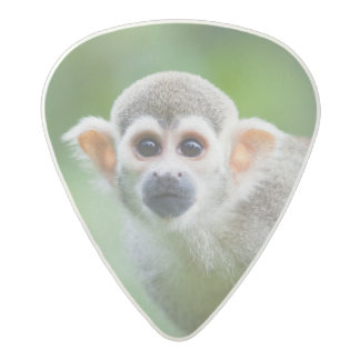 Close-up of a Common Squirrel Monkey Acetal Guitar Pick