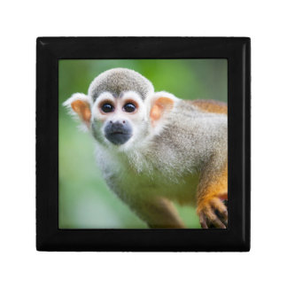 Close-up of a Common Squirrel Monkey Gift Box