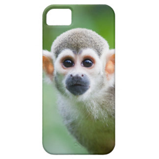 Close-up of a Common Squirrel Monkey iPhone 5 Cover