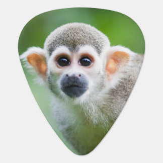 Close-up of a Common Squirrel Monkey Plectrum
