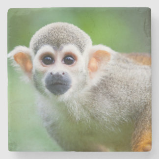 Close-up of a Common Squirrel Monkey Stone Coaster
