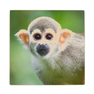 Close-up of a Common Squirrel Monkey Wood Coaster