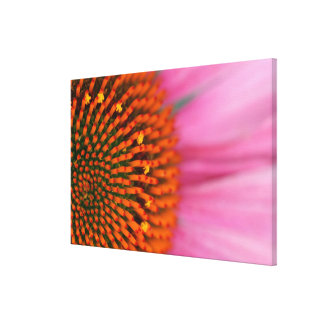 Close-up of a Cone Flower in the summertime, Canvas Print