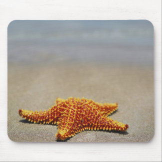 Close-up of a Cushion Starfish Mouse Mat