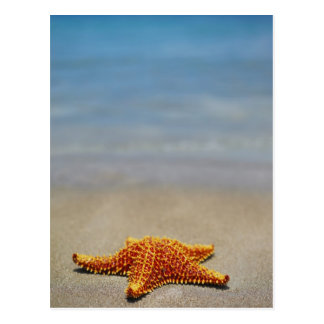 Close-up of a Cushion Starfish Postcard