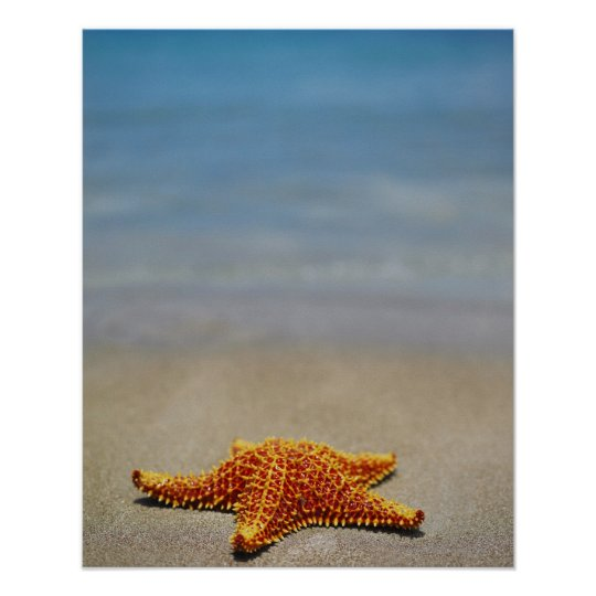Close-up of a Cushion Starfish Poster