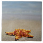 Close-up of a Cushion Starfish Tile