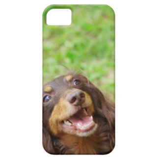 Close-up of a Dachshund dog iPhone 5 Covers