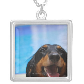Close-up of a Dachshund dog panting Silver Plated Necklace
