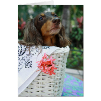 Close-up of a Dachshund dog sitting in a basket Card