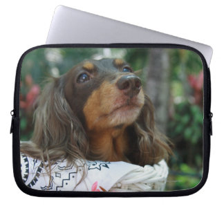 Close-up of a Dachshund dog sitting in a basket Computer Sleeve