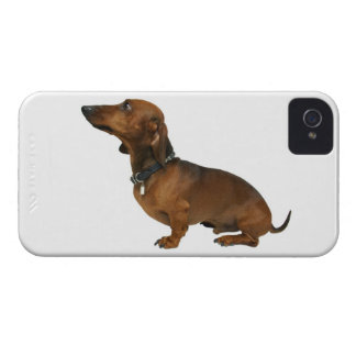Close up of a dachshund iPhone 4 Case-Mate cases