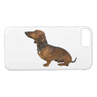 Close up of a dachshund iPhone 8/7 case