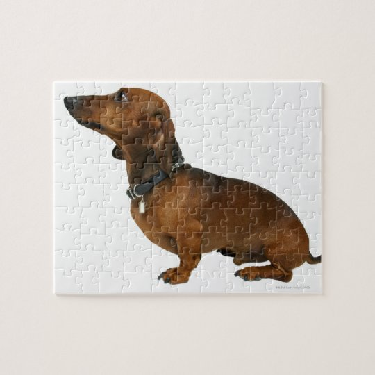 Close up of a dachshund jigsaw puzzle