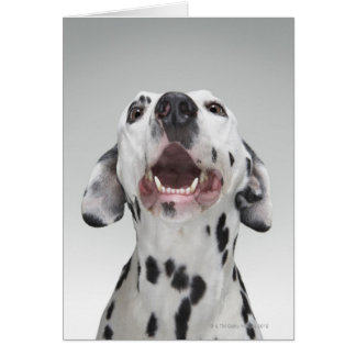 Close up of a Dalmatian dog Card