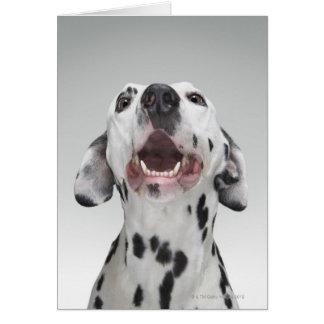 Close up of a Dalmatian dog Card