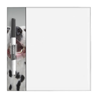 Close up of a Dalmatian dog Dry Erase Board