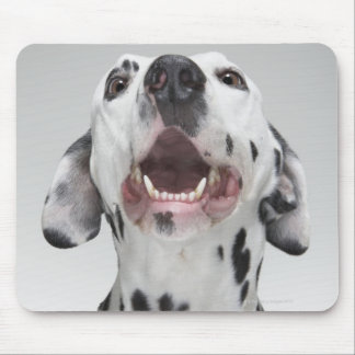 Close up of a Dalmatian dog Mouse Mat