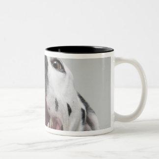Close up of a Dalmatian dog Coffee Mugs