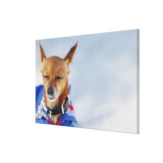 Close-up of a dog 2 canvas print