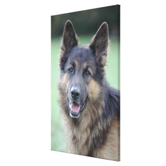 close-up of a dog face canvas print