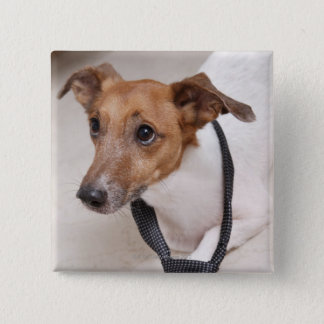 Close-up of a dog putting on a tie 15 cm square badge