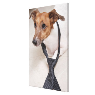 Close-up of a dog putting on a tie canvas print